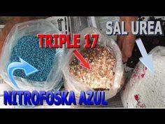 Uso de fertilizante sal urea, nitrofoska azul, triple 17 para embellecer las plantas - YouTube