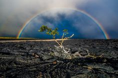 A rainbow frames a lone tree and a lava field along Saddle Road on the way to Mauna Kea in Big Island, Hawaii. Photograph by Sigmà Sreedharan