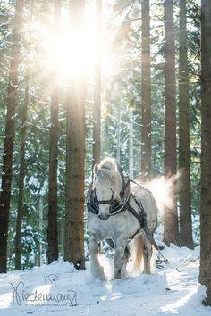 Ritt durch den schneebedeckten Wald. #APASSIONATA
