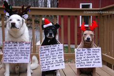 Tip #300  www.peaceandpaws.org Christmas Holidays, Christmas Tree, Paws Rescue, Tip Of The Day, Twinkle Twinkle, Dog Cat, Seasons, Pets, Animals