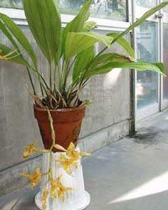 24 Orquideas Orquideas Jardinería Plantas