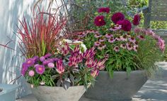 Ideen für eine herbstlich gestaltete Terrasse Beautifully autumnal: From pink to purple, the play of colors ranges from Japanese blood grass (Imperata cylindrica 'Red Baron'),. Fall Flowers, Red Flowers, Rosa Tattoo, Stipa, Fall Containers, Terrace Design, Garden Pests, Color Rosa, Petunias