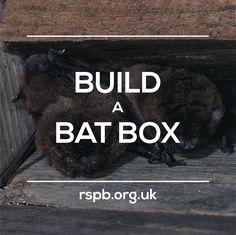 Putting up a bat box will give these fascinating night-time creatures somewhere safe to roost, raise their pups and sleep during the day. #homesfornature