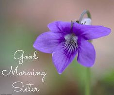 Looking for Good Morning Wishes for Sister? Start your day by sending these beautiful Images, Pictures, Quotes, Messages and Greetings to your Sis with Love. Good Morning Sister Images, Funny Good Morning Quotes, Good Morning Gif, Morning Pictures, Good Morning Wishes, Prayers For Sister, Wishes For Sister, Love My Sister, Weekday Quotes