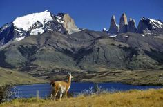 Backpack thru Torres del Paine National Park, Patagonia, Chile