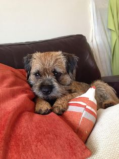 Amber on Twitter: All comfy for my mid morning snooze... #BTPosse