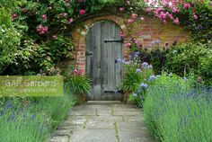 Wooden door in walled garden with climbing rose, perennial Campanula, Clematis. Stone path edged with Lavandula - lavender in July. Garden Walls, Garden Plants, Path Edging, Walled Garden, Stone Path, Lavandula, Decks And Porches, Climbing Roses, Clematis