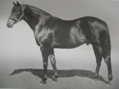 Tudor Melody(1956)Tudor Minstrel- Matelda By Dante. 4x4 To Gainsborough & Pharos, 5x5 To Phalaris, Scapa Flow & Sundridge. 5x5x5 To Dark Ronald. 23 Starts 7 Wins 1 Second 5 Thirds. $29,469. Won Chelsam S (Eng), Prince Of Wales S(Eng). Champion 2 YO In England.  Very Good Sire With Several Important Sons In Europe. Died In 1978.