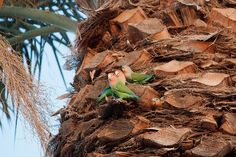 Parrot family by Dru Bloomfield - At Home in Scottsdale, via Flickr