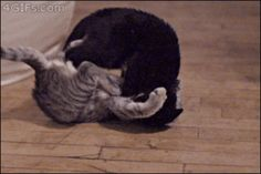 Matrix Cats and more funny cat gifs.