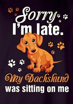 Blame the dachshund Dapple Dachshund, Funny Dachshund, Mini Dachshund, Dachshund Puppies, Weenie Dogs, Daschund, Brown Dachshund, Doggies, Hot Dogs