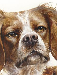 Watercolor Print, Watercolor Paper, French Brittany Spaniel, Dog Gifts, Lovers Art, My Images, Art Prints, Dogs, Plein Air