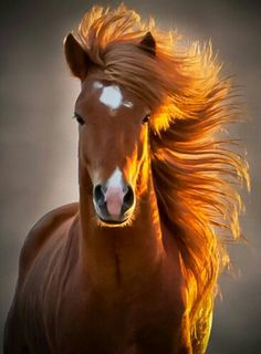 Beautiful golden brown horse