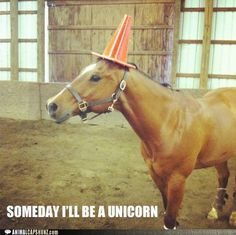 Not everything can be really funny, some things are just mildly funny. Not every picture is worth an LOL, some funny pictures are worth a chuckle and there is nothing wrong with that. Here are 38 pictures worth a chuckle. Try not to LOL. Funny Horse Memes, Funny Horses, Funny Animal Memes, Cute Funny Animals, Animal Quotes, Funny Animal Pictures, Funny Cute, The Funny, Funny Memes