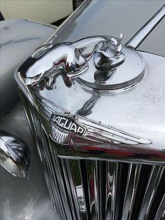 Jaguar Cars, Jaguar Xj, Vintage Cars, Antique Cars, Car Cooler, Car Hood Ornaments, Jaguar Daimler, Car Logos, E Type