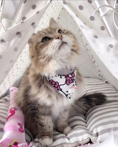 Kitty in pet teepee tent. Photo by Dog & Teepee - more than just dog and cat bed. We've created a space that your fur babies will love calling home. Cat Teepee, Teepee Tent, Animals And Pets, Cute Animals, Funny Cat Pictures, Dog Bed, Fur Babies, Kitten, Space