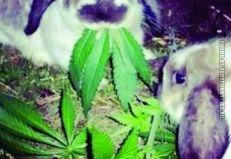 Strange Lettuce