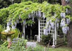 wisteria can be planted in containers... for easy transport to a new house some day