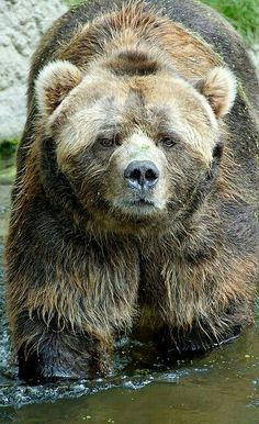 2927523fef9 371 Best Bear with me images in 2019
