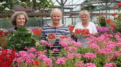 Die ersten Früchte der neuen Saison in Bokholt-Hanredder: Michaela Kollotzek (von links) verkauft Erdbeeren an Helga Berwing und Sabine Brodersen.