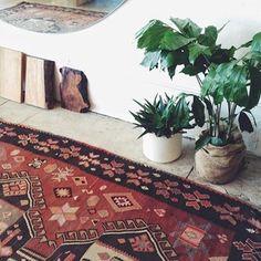 Plants and rug