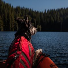 Are you planning a camping trip, but can't decide whether to bring your pet? Going on a camping trip doesn't mean that you have to leave your dog behind. Tips for camping with pets Kayaks, Best Hiking Gear, Food Dog, Dog Backpack, Camping Spots, Camping Life, Love Boat, Blue Orchids, Dog Activities