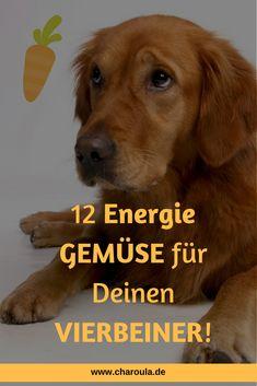 #Gemüse und #Früchte sind für eine ausgewogene Ernährung des Hundes genauso wichtig wie Fleisch und Innereien. Doch welche sind geeignet? #hund