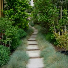 Garden Pool, Garden Paths, Front Yard Flowers, Hampton Garden, Monkey Grass, Blue Fescue, Beach Gardens, Free Plants, Front Yard Landscaping