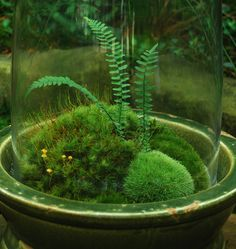 Moss and fern terrarium~ I love the foresty look