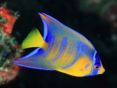 Innovative and sustainable fishkeeping practices for freshwater and saltwater fish. Underwater Creatures, Ocean Creatures, Underwater Sea, Animals Beginning With Q, Beautiful Sea Creatures, Animals Beautiful, Colorful Fish, Tropical Fish, Riviera Maya