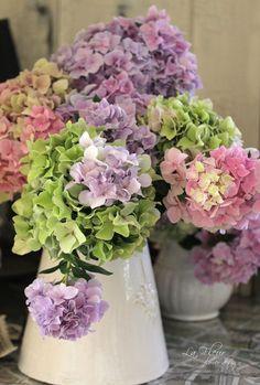.Hydrangea pastel mix Ik ben dol op hortensia, liefst in paars