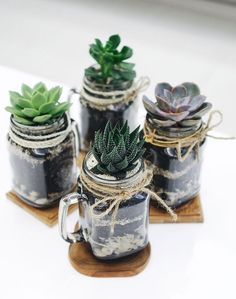 Succulents in mason jar mugs.