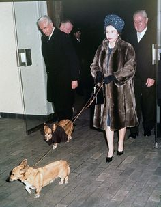 As Queen Elizabeth II celebrates 60 years on the throne, we look back at her love affair with her favorite animal: the corgi. Her first, Susan, was given to her on her eighteenth birthday and since then, the Queen has owned four to five at a time. Queen Elizabeth Birthday, Queen Elizabeth Ii, Queen And Prince Phillip, Prince Philip, Prince Charles, Princesa Margaret, British Royal Families, Royal Queen, Queen Elizabeth