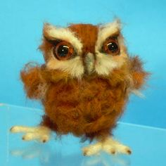 Hoot Baby Eastern Owl