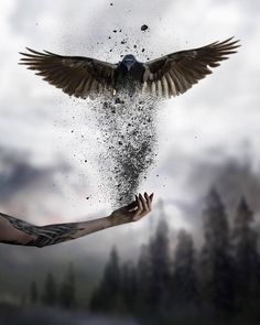 Surreal Art Photography Photo Manipulation Fantasy Ideas For 2019 Dark Fantasy Art, Dark Art, Raabe Tattoo, Photography Photos, Creative Photography, Artistic Photography, Imagenes Dark, Photoshopped Animals, Raven Art