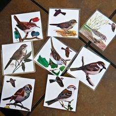 Burgess Bird Book http://satorismiles.com/category/1-subjects/science/nature-study/ link to interactive bird anatomy page idea of placing studied birds on a wall tree