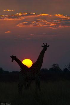 Botswana Sunset by John Klingel on 500px