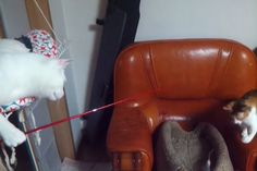 Nothing to see here, just a cat taunting another cat with a fake mouse on a stick