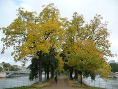 L'Île aux Cygnes en automne http://www.pariscotejardin.fr/2013/10/l-ile-aux-cygnes-en-automne/