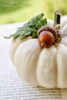 Pumpkin & acorn