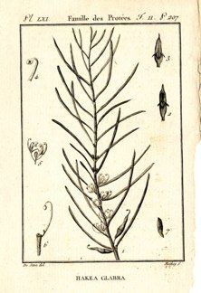"buffon botanical french 1775 engraving 4 x 6""  $25 - 01"