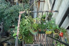 fire escape garden - - urban organic gardening tips