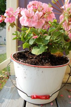 If you'd like to plant a reusable or recycled container or you simply have a flair for the whimsical, container gardening leaves acres of room for creativity.