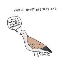Safely Endangered, Turtle Dove, Laugh Lines, Animal Facts, Random Facts, Pigeon, How To Relieve Stress, Art Drawings, Doodles
