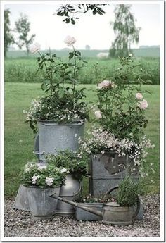 collection of galvanized containers make a great impact. What is especially lovely is unifying effect of white and soft pink flowers.