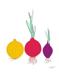 Kitchen art print - Onions -  illustration, 8x10, wall art. $20.00, via Etsy.