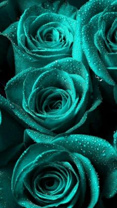 49 Ideas For Wall Paper Iphone Flowers Turquoise Flower Background Wallpaper, Flower Phone Wallpaper, Flower Backgrounds, Flower Wallpaper, Wallpaper Backgrounds, Iphone Wallpaper, Beautiful Flowers Wallpapers, Beautiful Rose Flowers, Amazing Flowers