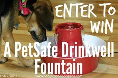 Enter to win a PetSafe Drinkwell Avalon or Pagoda Fountain to keep your pets hydrated! | http://www.beaglesandbargains.com/petsafe-drinkwell-fountains-pets-hydrated/