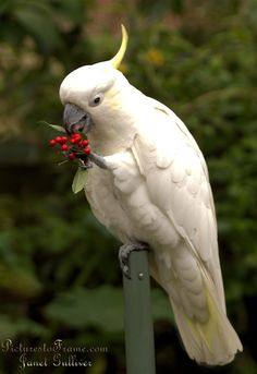 Funny Birds, Cute Birds, Pretty Birds, Beautiful Birds, Animals Beautiful, Animals And Pets, Baby Animals, Cute Animals, Tropical Birds