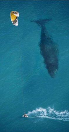Kitesurfer and whale on the coast of Australia • photo: Mike Swaine on Above Photography